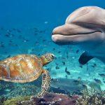 دلفين تعرف على حياة وأنواع الدلفين صور ميكس 48