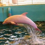 دلفين تعرف على حياة وأنواع الدلفين صور ميكس 5