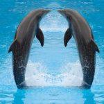 -دلفين-تعرف-على-حياة-وأنواع-الدلفين-صور-ميكس-8-150x150 صور دلفين تعرف على حياة وأنواع الدلفين