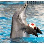 -دلفين-تعرف-على-حياة-وأنواع-الدلفين-صور-ميكس-9-150x150 صور دلفين تعرف على حياة وأنواع الدلفين
