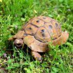 سلاحف 2109 تعرف على حياة السلاحف صور ميكس 1