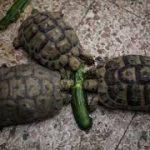 سلاحف 2109 تعرف على حياة السلاحف صور ميكس 12