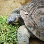 سلاحف 2109 تعرف على حياة السلاحف صور ميكس 14