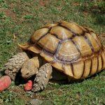 سلاحف 2109 تعرف على حياة السلاحف صور ميكس 22