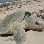 سلاحف 2109 تعرف على حياة السلاحف صور ميكس 24