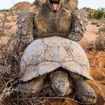 سلاحف 2109 تعرف على حياة السلاحف صور ميكس 26