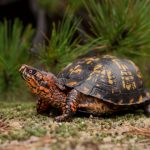 سلاحف 2109 تعرف على حياة السلاحف صور ميكس 27