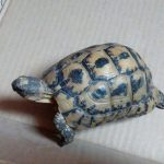سلاحف 2109 تعرف على حياة السلاحف صور ميكس 29