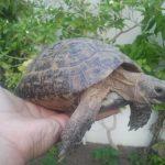 سلاحف 2109 تعرف على حياة السلاحف صور ميكس 35