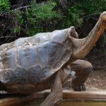 سلاحف 2109 تعرف على حياة السلاحف صور ميكس 37