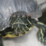 سلاحف 2109 تعرف على حياة السلاحف صور ميكس 40