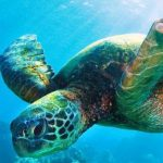 سلاحف 2109 تعرف على حياة السلاحف صور ميكس 42