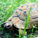 سلاحف 2109 تعرف على حياة السلاحف صور ميكس 5