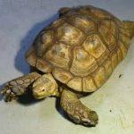 سلاحف 2109 تعرف على حياة السلاحف صور ميكس 7