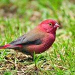 -طائر-الوقواق-وحياة-أنواع-طائر-الوقواق-صور-ميكس-24-150x150 صور طائر الوقواق وحياة أنواع طائر الوقواق