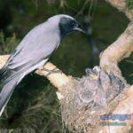 -طائر-الوقواق-وحياة-أنواع-طائر-الوقواق-صور-ميكس-28-150x150 صور طائر الوقواق وحياة أنواع طائر الوقواق