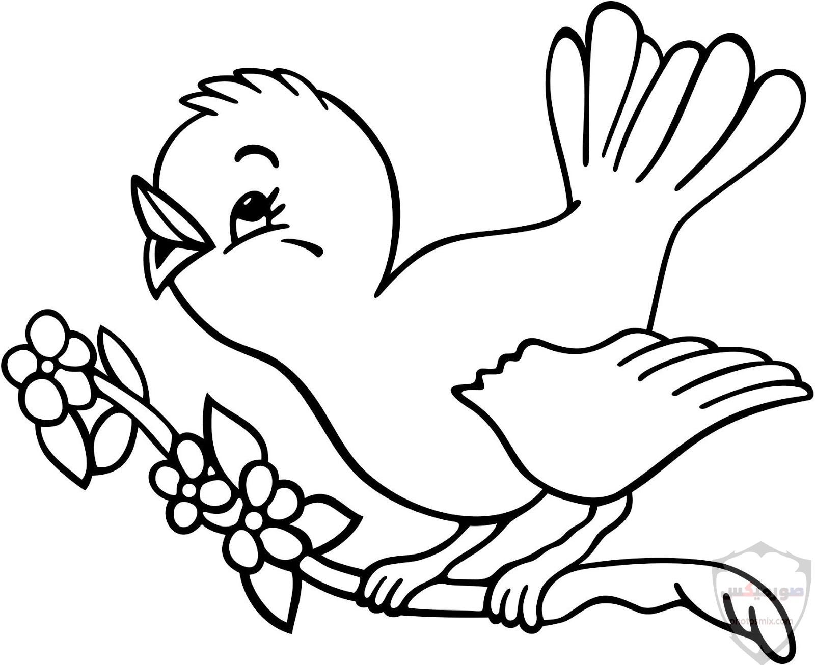 صور طيور. صور طيور عافصير ملونة الحب للتصميم اجمل انستقرام رمزيات طائر الربيع جمال الطيور. اجمل العصافير طيور الربيع صور عصفور 1