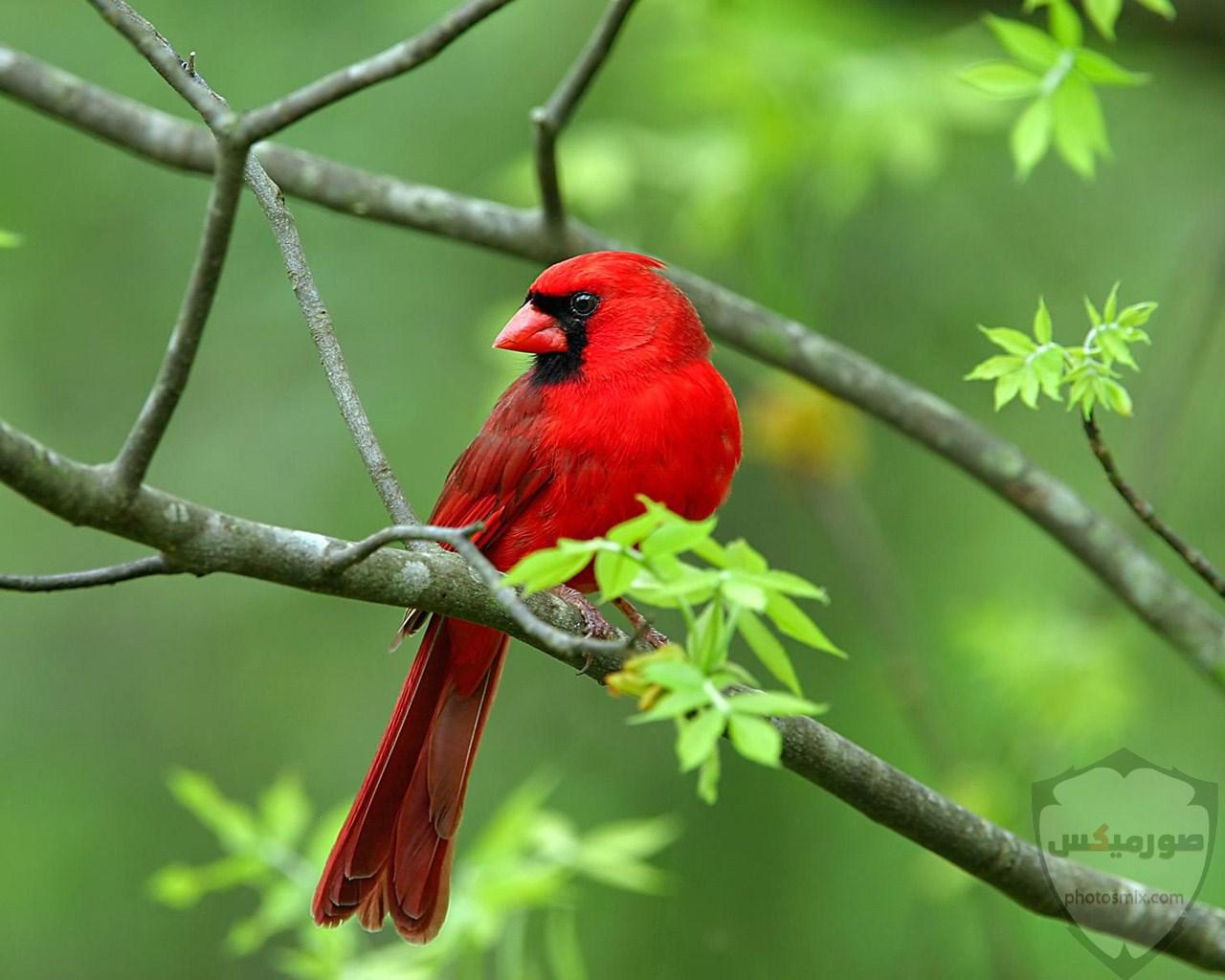 صور طيور. صور طيور عافصير ملونة الحب للتصميم اجمل انستقرام رمزيات طائر الربيع جمال الطيور. اجمل العصافير طيور الربيع صور عصفور 2