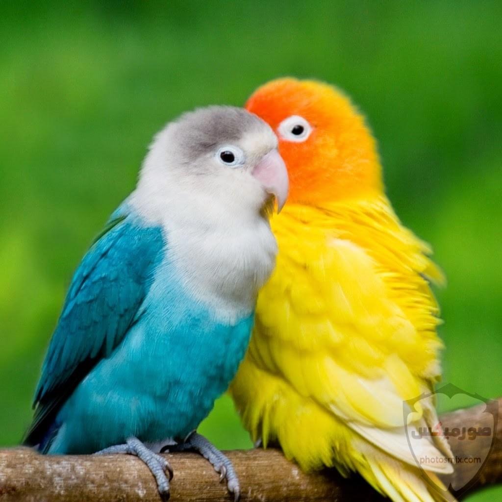 صور طيور. صور طيور عافصير ملونة الحب للتصميم اجمل انستقرام رمزيات طائر الربيع جمال الطيور. اجمل العصافير طيور الربيع صور عصفور 6