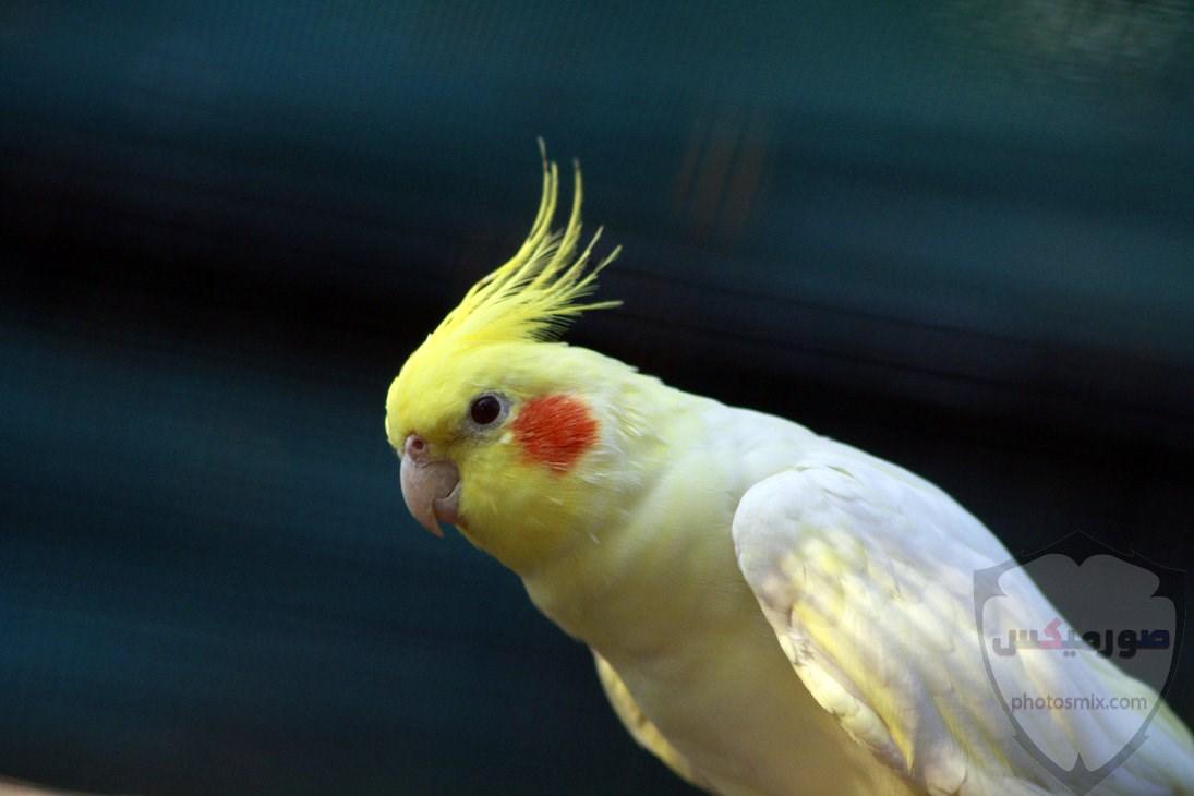 صور عصافير أجمل صور عصافير صور عصفور 2020 11
