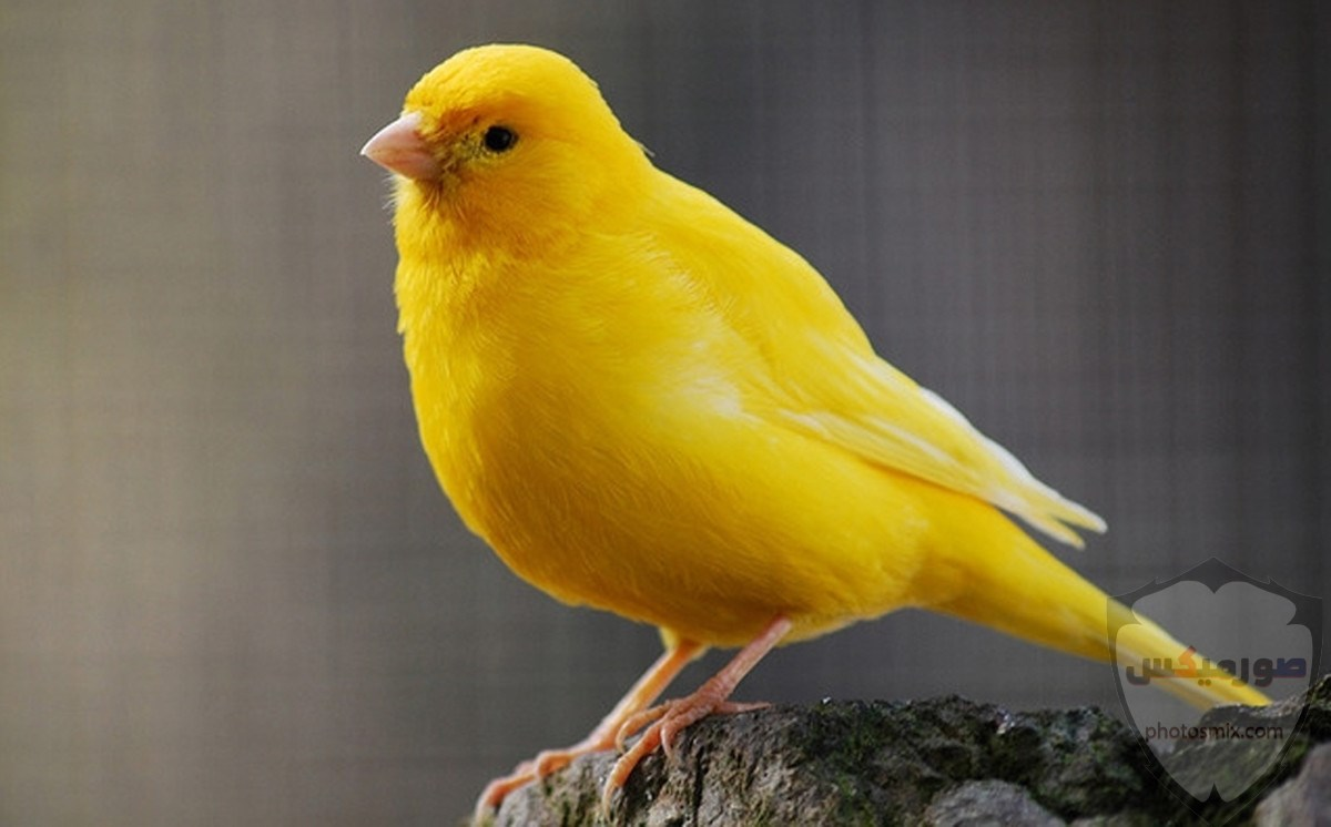صور عصافير أجمل صور عصافير صور عصفور 2020 5