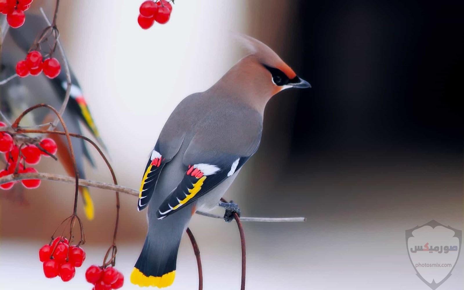 صور عصافير أجمل صور عصافير صور عصفور 2020 7