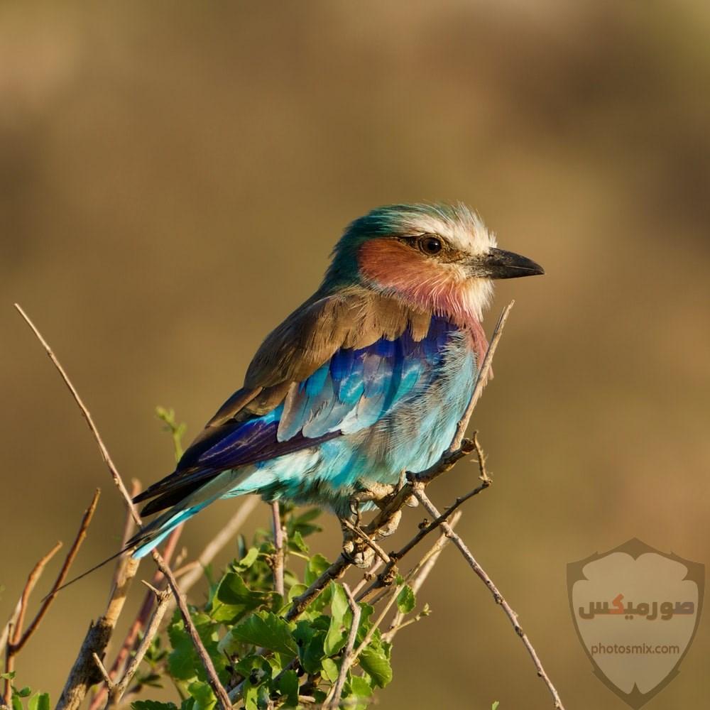 صور عصافير أجمل صور عصافير صور عصفور 2020 8