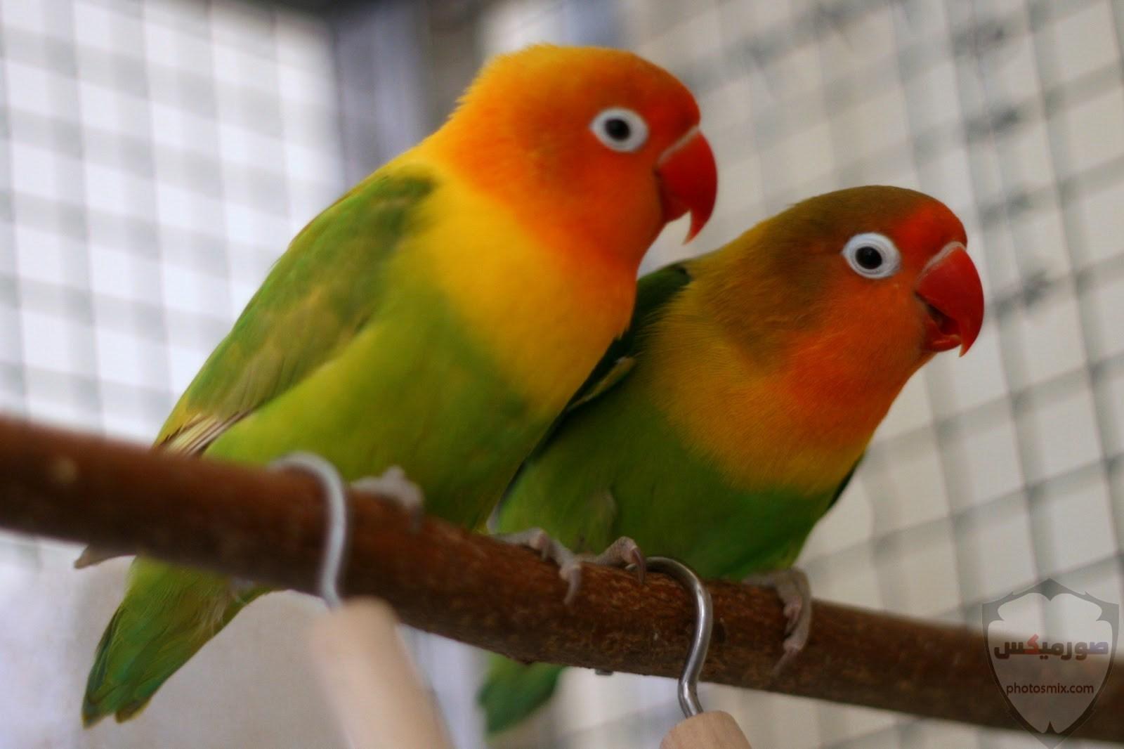 صور عصافير أجمل صور عصافير صور عصفور 2020 9