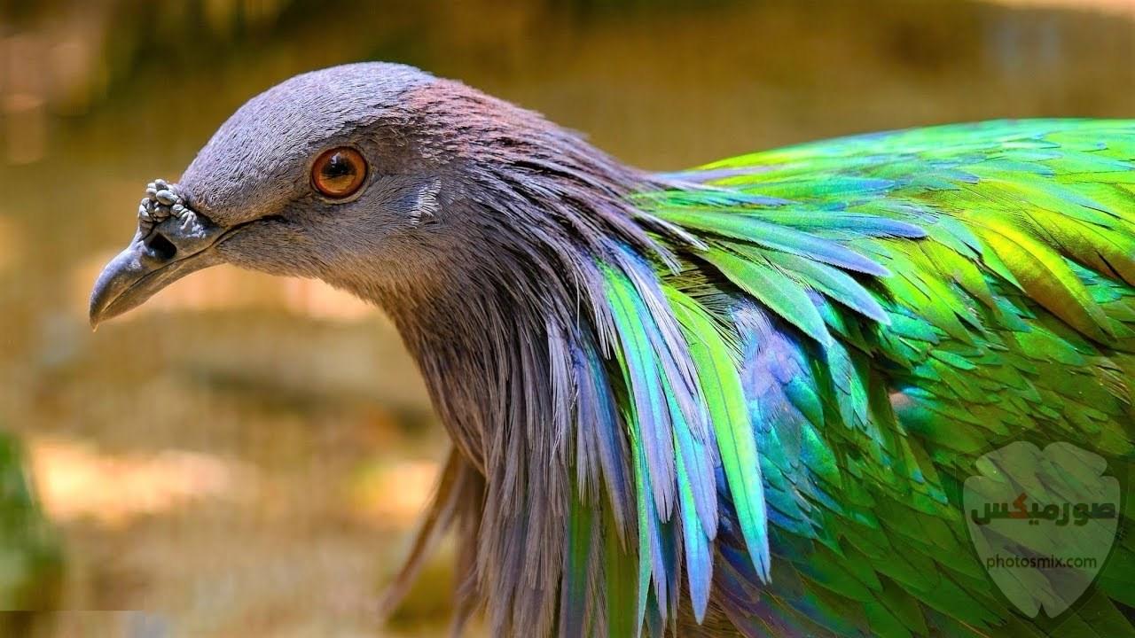 صور عصافير صور اجمل و اروع العصافير 1