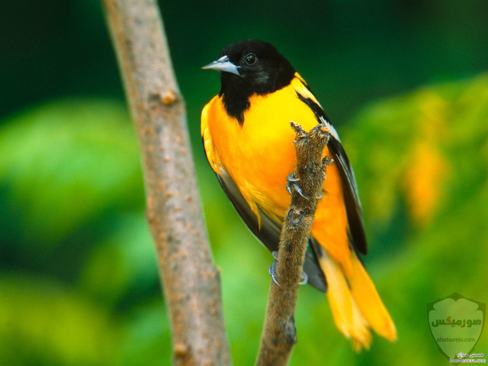 صور عصافير صور اجمل و اروع العصافير 10