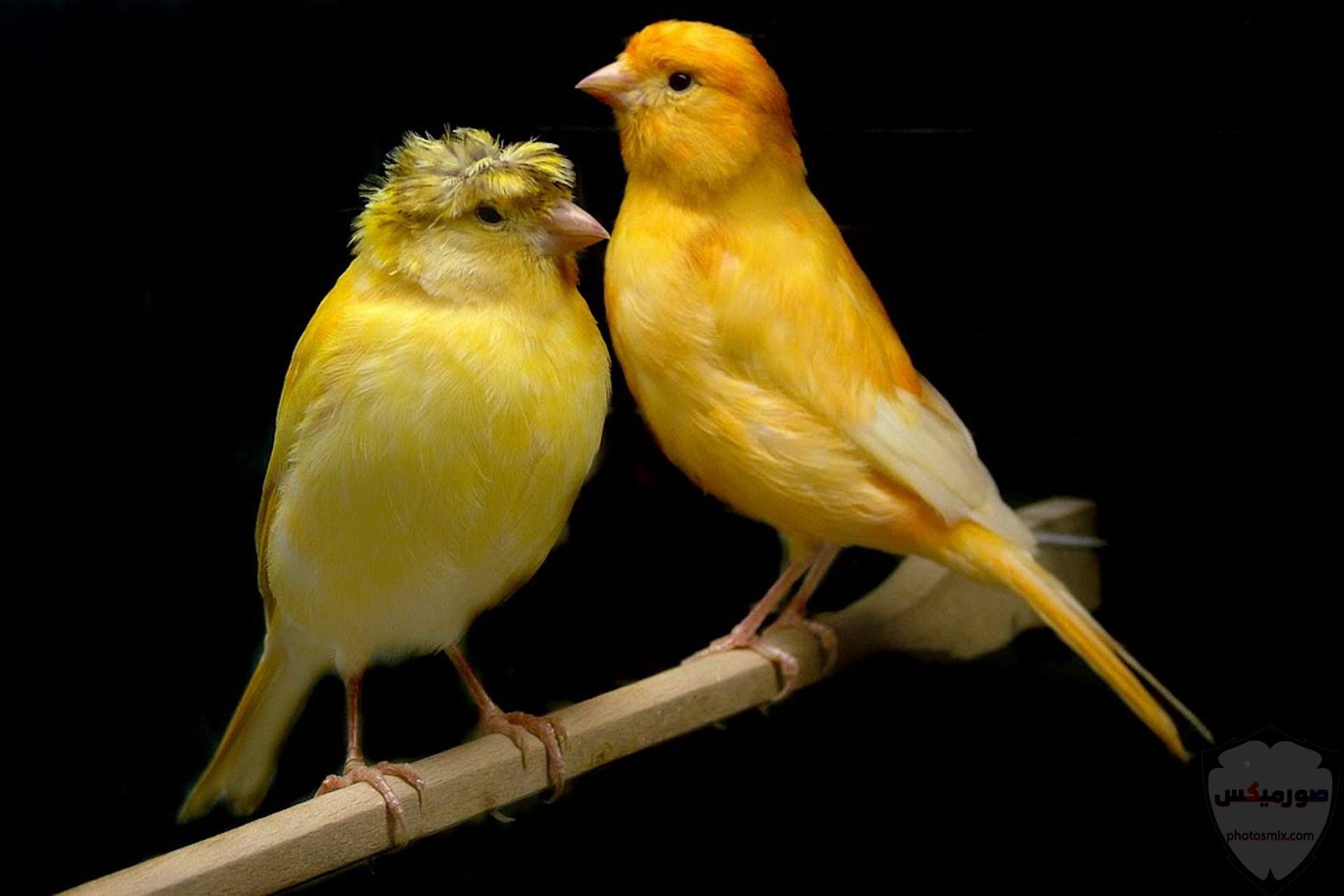 صور عصافير صور اجمل و اروع العصافير 3