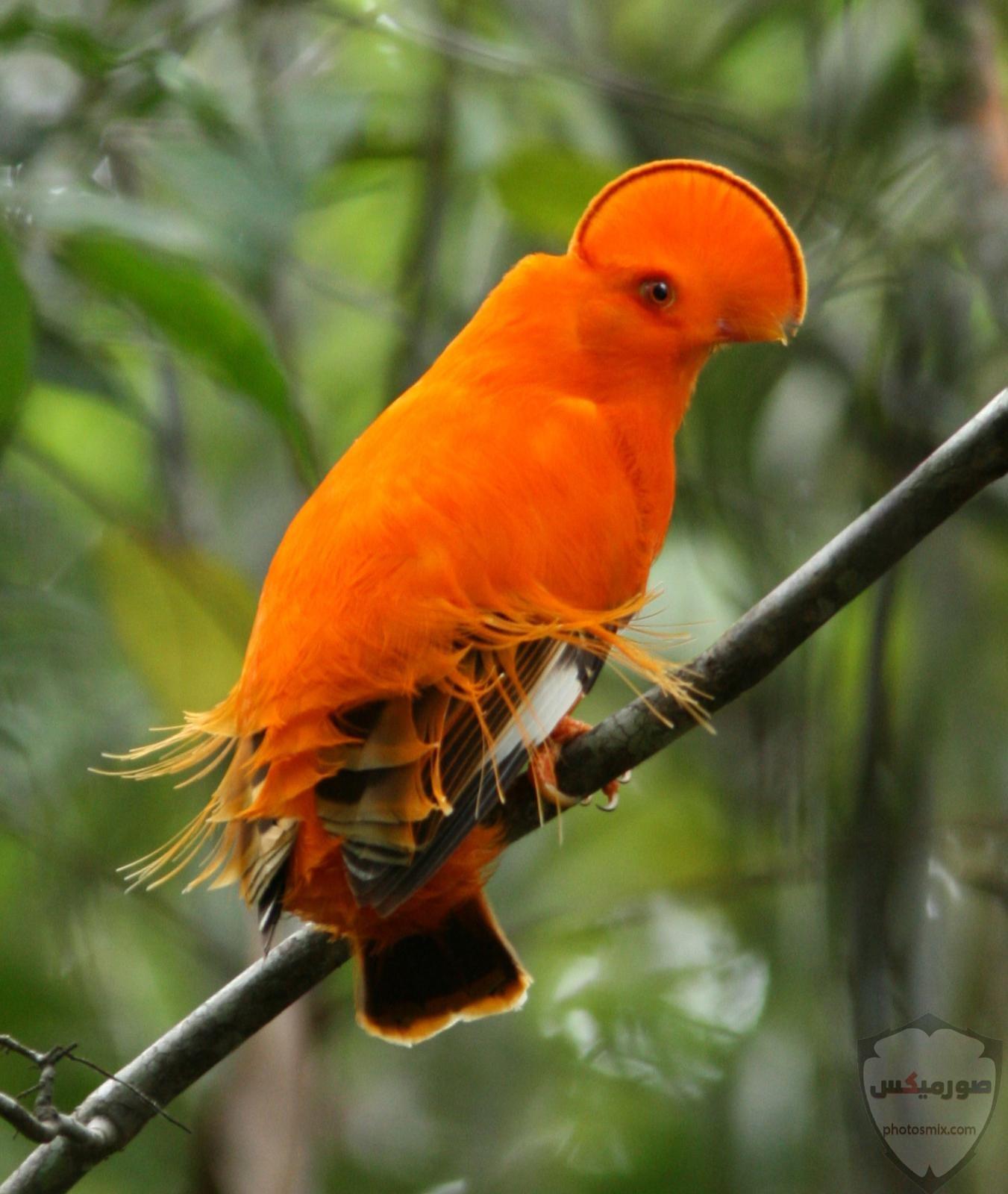 صور عصافير صور اجمل و اروع العصافير 4