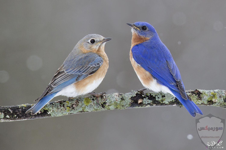 صور عصافير صور اجمل و اروع العصافير 5