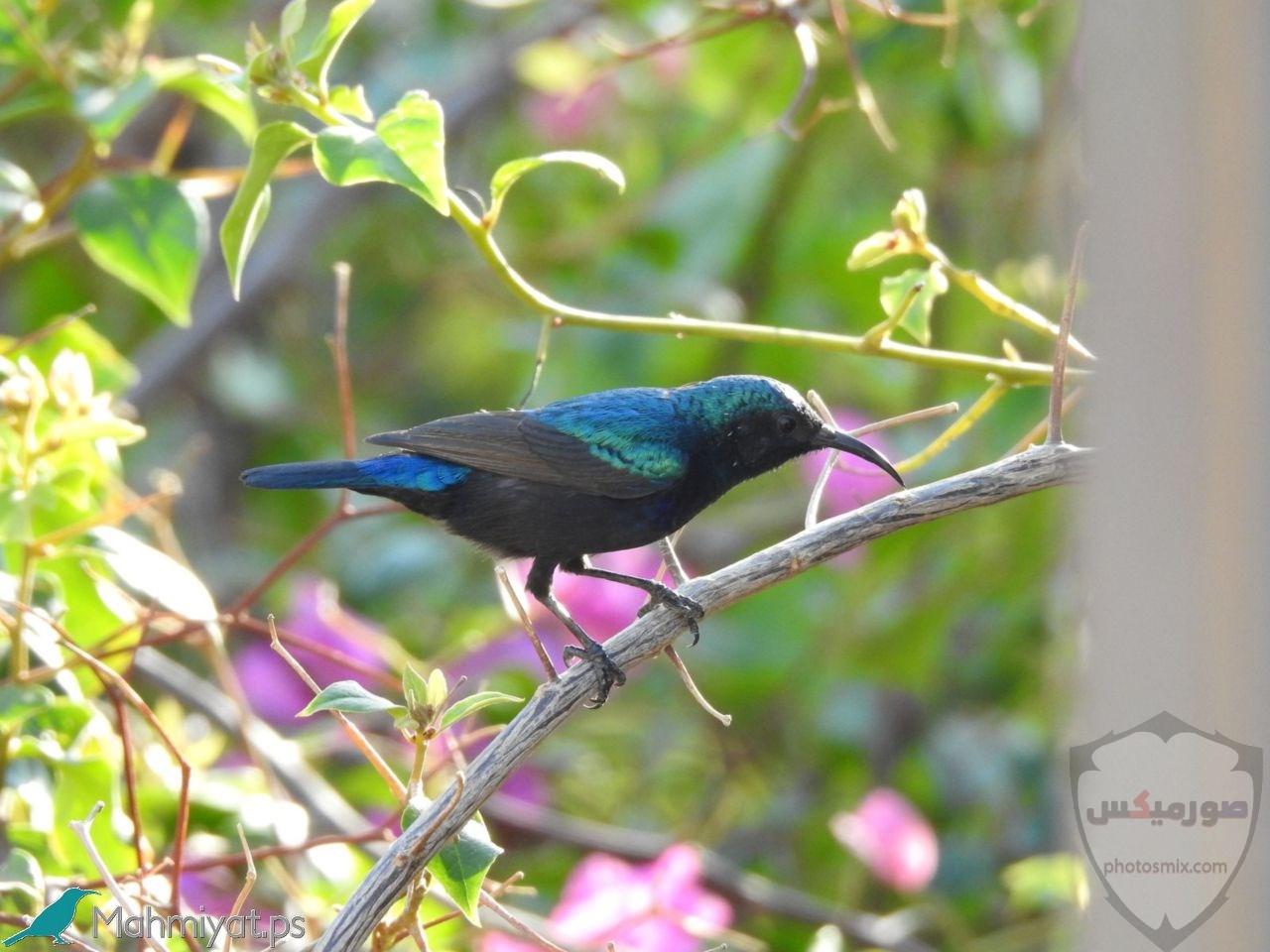 صور عصافير صور اجمل و اروع العصافير 7
