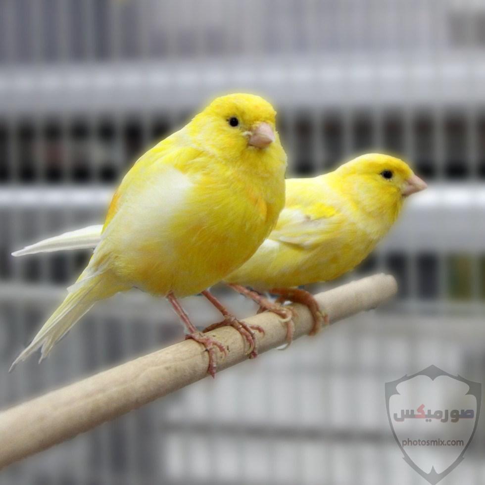 صور عصافير صور اجمل و اروع العصافير 8