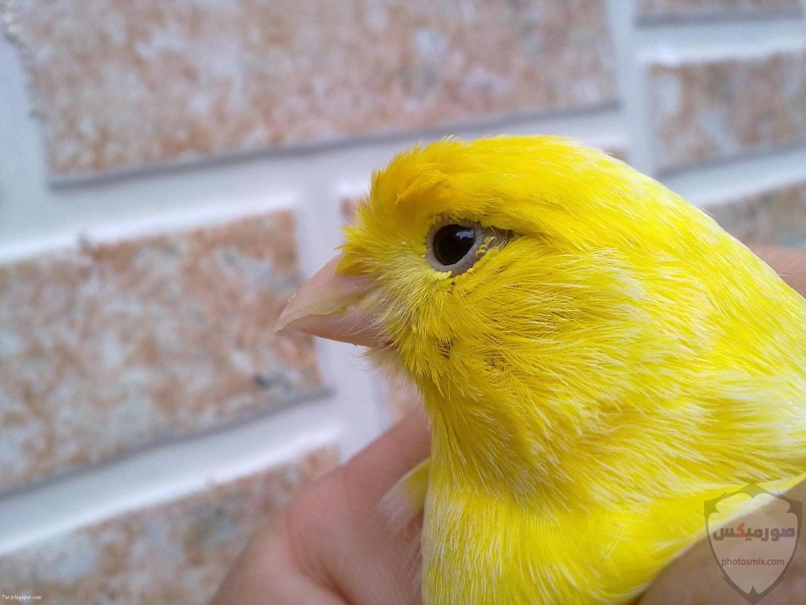 صور عصافير HD أحلي خلفيات عصافير الحب 2