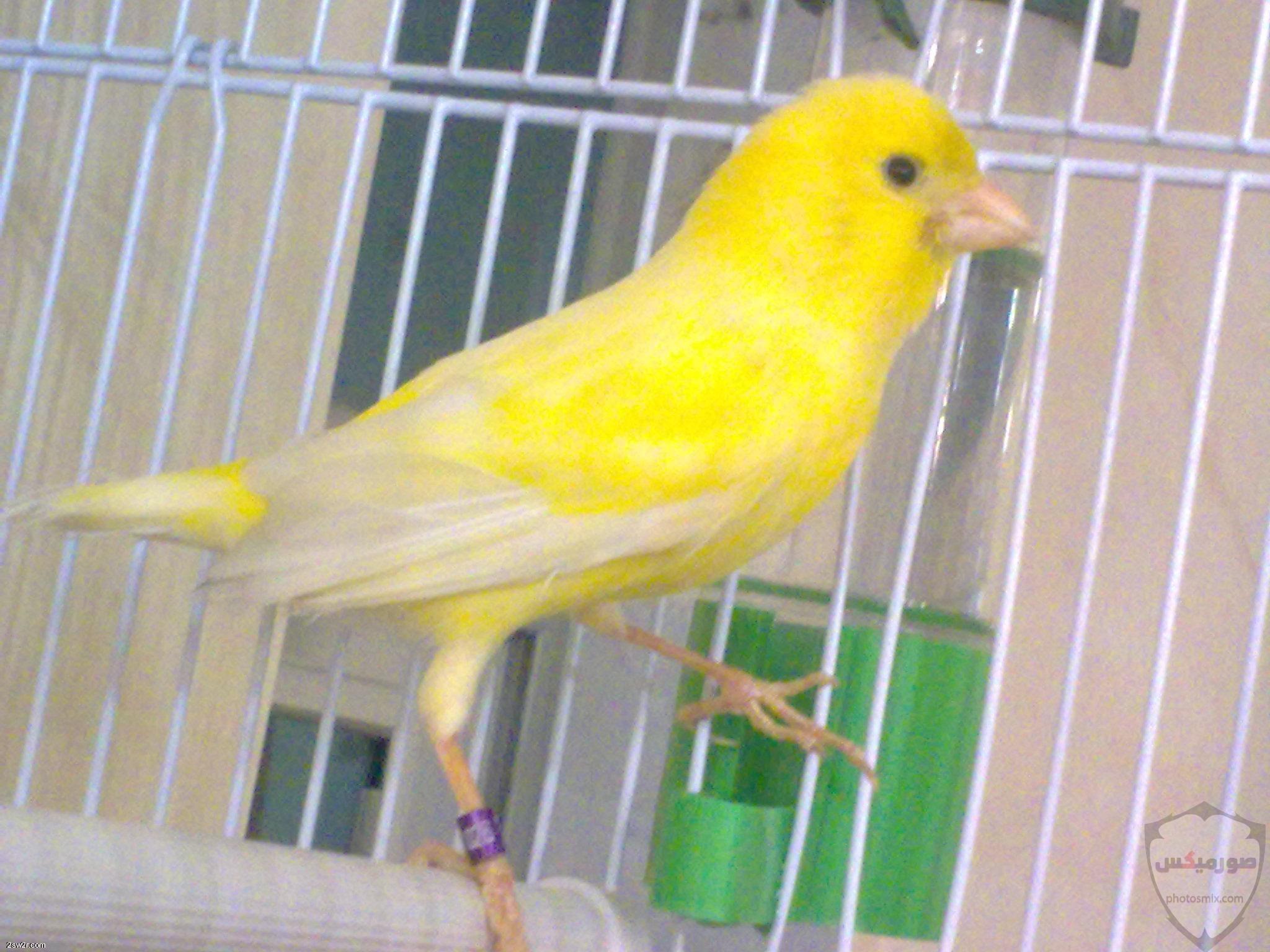 صور عصافير HD أحلي خلفيات عصافير الحب 3