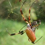 عنكبوت تعرف على أنواع العنكبوت وحياتة صور ميكس 11