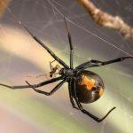 عنكبوت تعرف على أنواع العنكبوت وحياتة صور ميكس 14