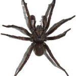 عنكبوت تعرف على أنواع العنكبوت وحياتة صور ميكس 15