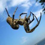 عنكبوت تعرف على أنواع العنكبوت وحياتة صور ميكس 17