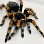 عنكبوت تعرف على أنواع العنكبوت وحياتة صور ميكس 2