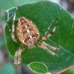 عنكبوت تعرف على أنواع العنكبوت وحياتة صور ميكس 28