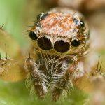عنكبوت تعرف على أنواع العنكبوت وحياتة صور ميكس 31