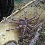 عنكبوت تعرف على أنواع العنكبوت وحياتة صور ميكس 32