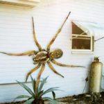 عنكبوت تعرف على أنواع العنكبوت وحياتة صور ميكس 38