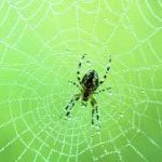 عنكبوت تعرف على أنواع العنكبوت وحياتة صور ميكس 39