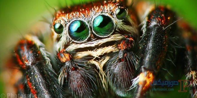 عنكبوت تعرف على أنواع العنكبوت وحياتة صور ميكس 4