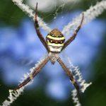 عنكبوت تعرف على أنواع العنكبوت وحياتة صور ميكس 40