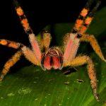 عنكبوت تعرف على أنواع العنكبوت وحياتة صور ميكس 42